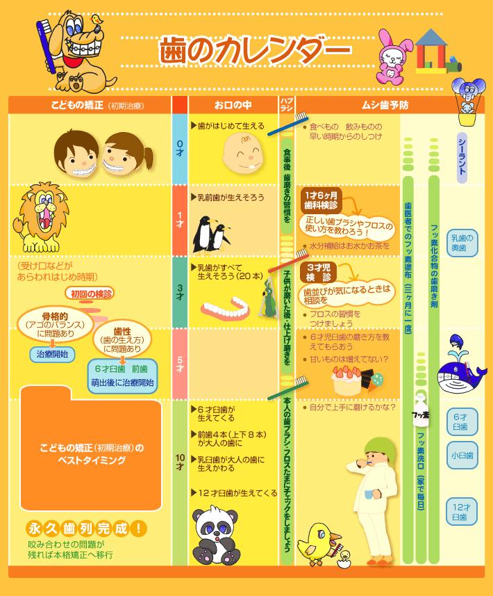 歯のカレンダー